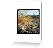 35 Degrees C Greeting Card