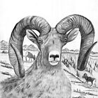 Big Horn Sheep - Charcoal by Gordon Pegler