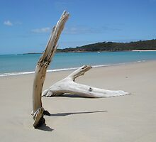Great Keppel Island Driftwood by OzShell