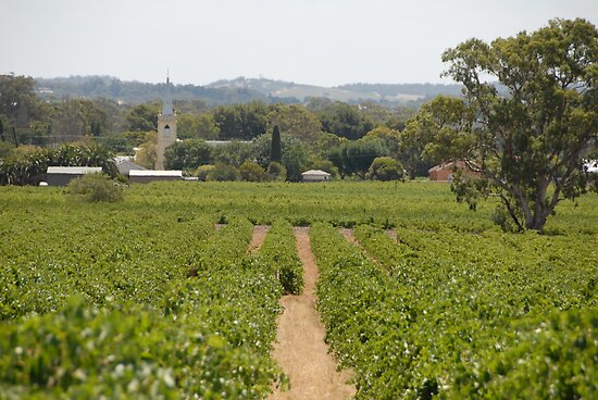 Barossa Valley by JimBob51