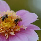 Dahlia with Bees by JimBob51