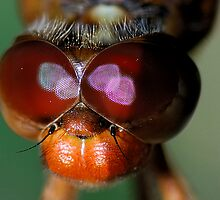 Red Eyes by Dennis Jones - CameraView