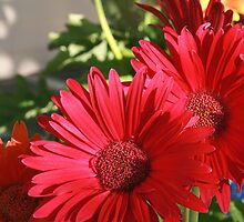 Red... Daisy? by CherishAtHome
