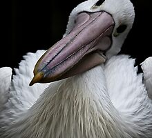 Mr. Pelican again by Lisa  Kenny