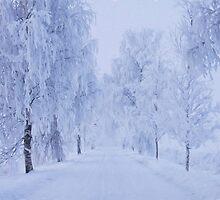 Winter by Veikko  Suikkanen