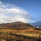 Black Combe , Christmas 2014 by Jamie  Green