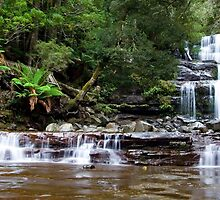 Liffey Falls by Martin Pot