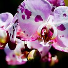 Spotty Orchid by Mary  Lane
