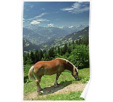 Horse at Kristberg, Austria Poster