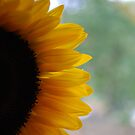 sunflower by Geri Bragg
