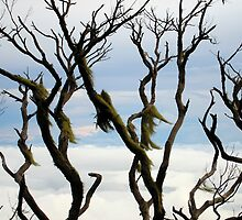 Mount KK Trees by cometh