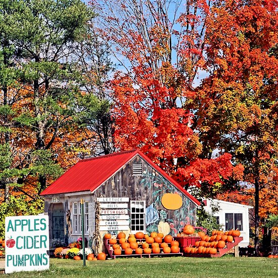 Apples Cider Pumpkins by DJ Florek