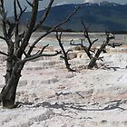 Mammoth Springs by Dawne Olson