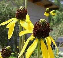 yellow flowers by Sheila McCrea