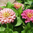 pink flowers by Sheila McCrea