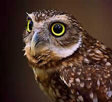 Burrowing Owl by Cheri  McEachin