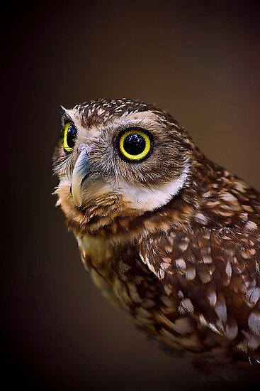Burrowing Owl by Cheri  McEachin