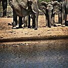 Elephant Waterhole by Scott Ward