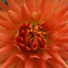 Dahlia by Tony Waite-Pullan