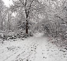 Hampstead Heath In The Snow - London, England by pms32