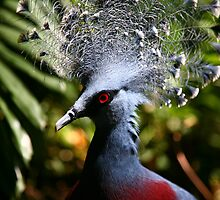 Victoria Crowned-Pigeon by Erland Howden