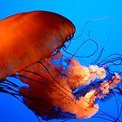 Jellyfish by Hilary Walker