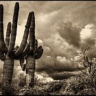 Saguaros and Clouds by Roger Passman