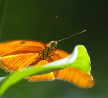 Butterfly #4 – May 2008 by wonderfulworld