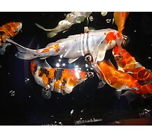 Koi 2 Photographic Print