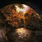 Tunnel Vision by Jessica Jenney
