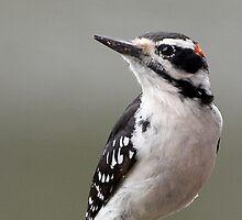Downy Woodpecker by Robert Elliott