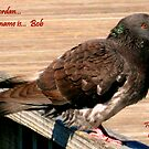 Jordan's bird... Bob by Roger Sampson