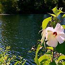 Hollyhock by the Pond by ctheworld