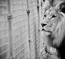 Let me out :( by Alistair Wilson