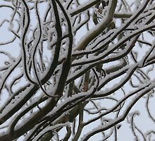 snowy branches by Wrigglefish