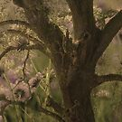 Oak and Flowers by bouldercreek