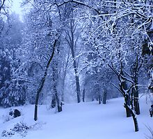 winter wonderland by unstableable