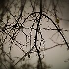 Night branches by owmyhands