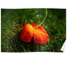 Water Droplet Petals Poster