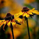 Black Eyed Susans by Pamela Hubbard