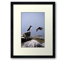 Leaping Puffin Framed Print