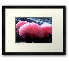 Life after death - II Framed Print