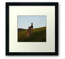 Roo Family Framed Print
