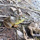 Glenn the Relaxing Frog in the USA by the pond. by Barberelli