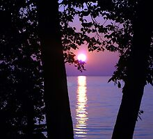 Purple Sunset by Holly Werner