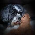 Puppy and Teddy by KeepsakesPhotography Michael Rowley