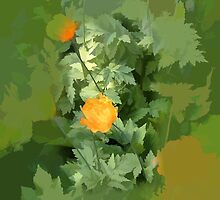 abstract of Welsh Poppies by hilarydougill