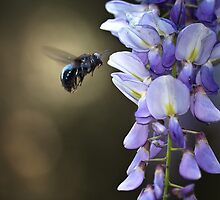 Bumbling Purple by ObeyMyBrain