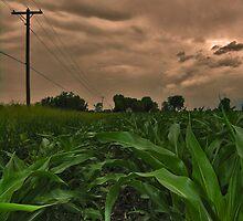 Corn Field by Shell59