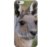 Eastern Grey Kangaroo Portrait iPhone Case/Skin